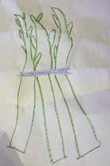 C7s asparagus