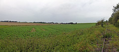 View SW from the railway line E of Grévillers