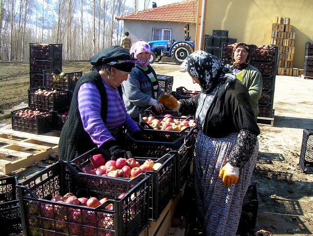 Sorting apples outside the cold storage; they gave me a bag of good ones to take away by bryandkeith on flickr