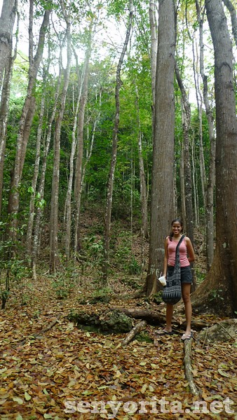 Bohol-Manmade-Forest1