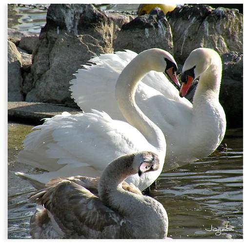 En famille au bord de l'eau by Jogabi-Michèle