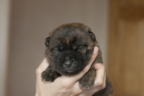 Kumi-Fall2011-Day12-Puppy5-Female-a