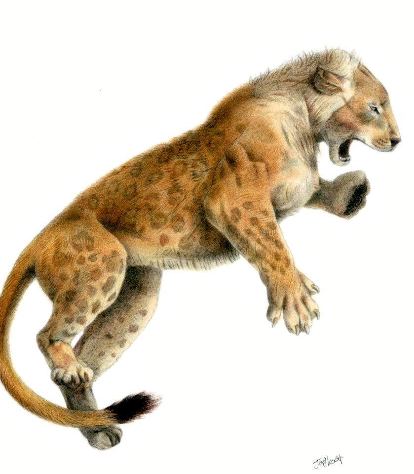 ライオンの画像 p1_23