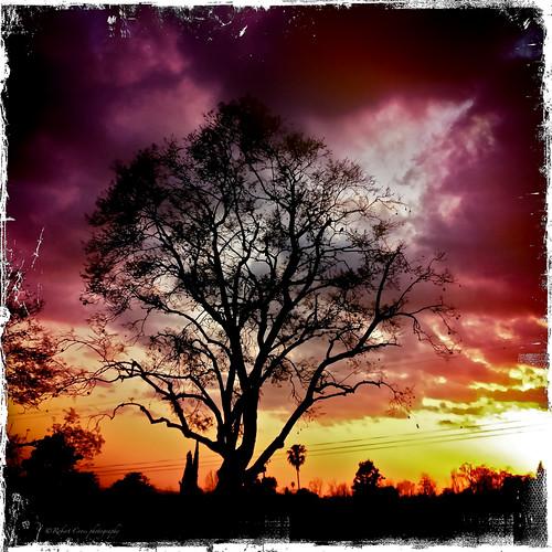 california sunset sky sun tree silhouette clouds square fire losangeles border jagged pasadena jacaranda february sangabrielmountains sierramadre iphone hipstamatic lucifervi kodotxgrizzled iphone4s