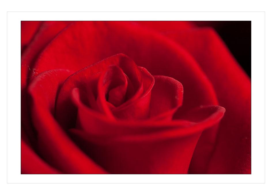 rosemakro3