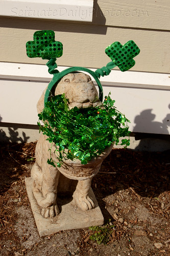 Everyone's Irish in Scituate come St. Patrick's Day... by Ali Crehan