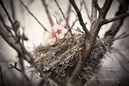 flores y nido