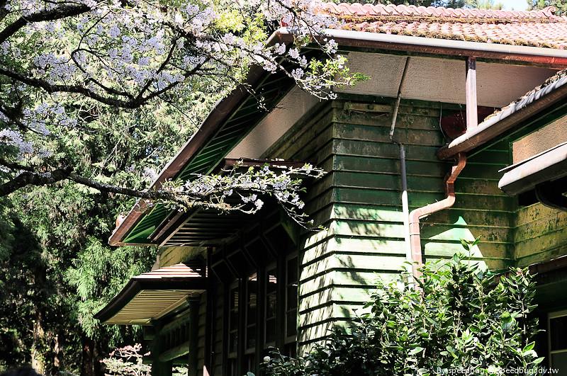 阿里山櫻花109
