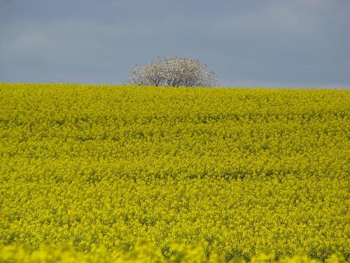 Frühling in Schleswig-Holstein