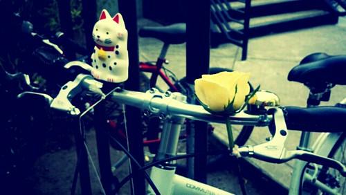 flowerbandit