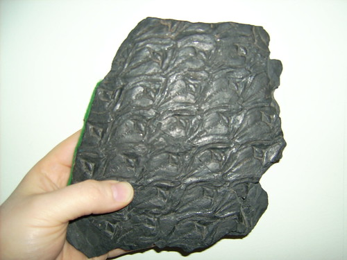 Lepidodendron fossil