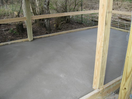 Chicken Run Cement Floor