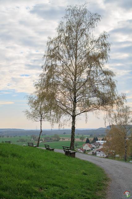 Burg Birke