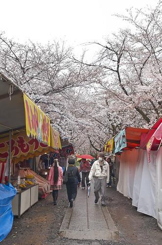 【写真】2014 桜 : 平野神社/2020-06-29/IMGP5553