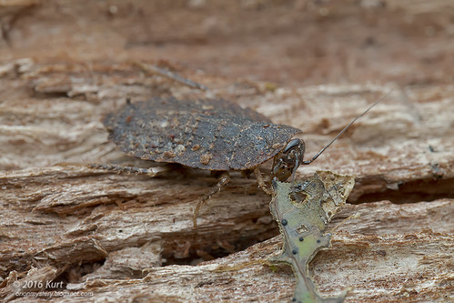 Blattodea_MG_9113 copy