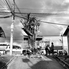 """No distrito de #pontezinha, no #cabodesantoagostinho , tem uma rua que dá para poetizar: """"no meio da rua tinha e tem o que sobrou de uma árvore"""""""