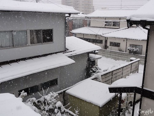aJARDIN-120225-neige