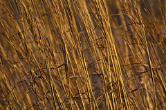 Grass Abstract D7K-7813 by Mully410 * Images