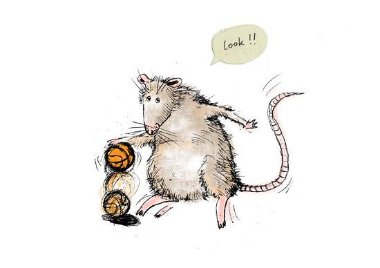rat ii