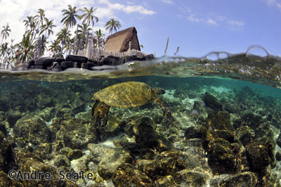 Best-snorkel-Honaunau
