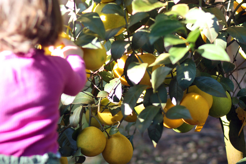 lemon girl 2