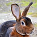rabbit image, photo or clip art