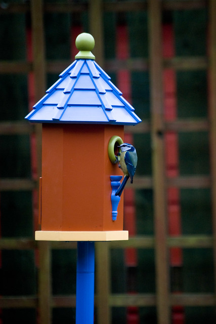130312_ Our new bird house has a visitor no1