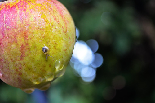 snail on a apple