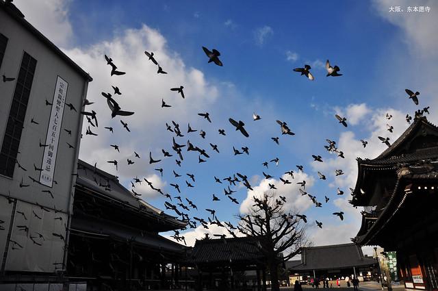 自在。東本願寺