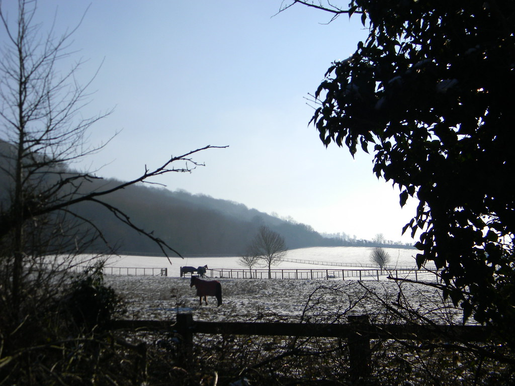 Horses in the snow Saunderton to Bledlow