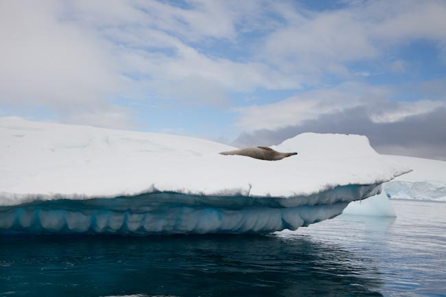 antarctica-blog-39