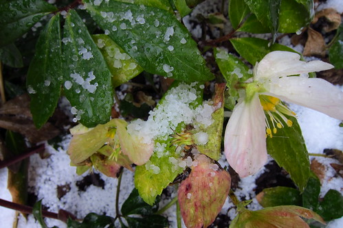 flowertime hail