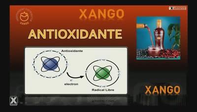Xango Intranet del Equipo de 1Euros.net6