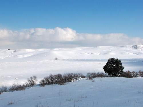 douglascounty snø neve schnee nieve sno sneeuw snö salju tree colorado paisaje paesaggio us america unitedstates landscape invierno hiver winter inverno snow saljunya usa sandraleidholdt