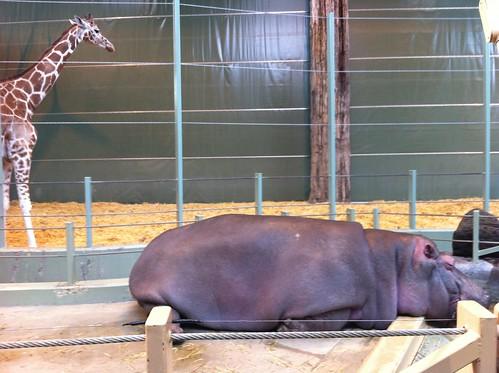 20120219 calgary zoo - 02