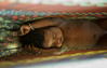 Afar Baby in Hammock Taken with a