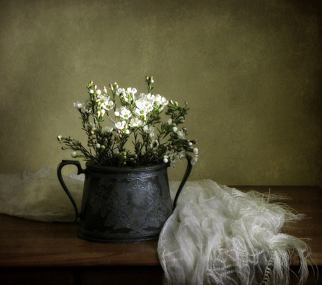 Still life photography by Vesna Armstrong