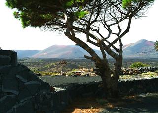 NORTH AFRICA 208