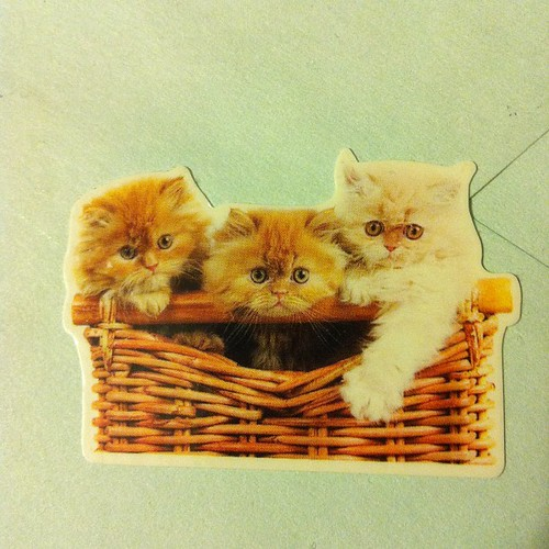 So cute kitten stickers.