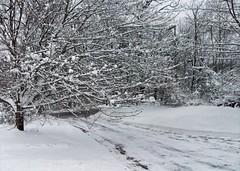 Snow_3212