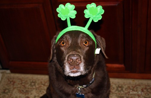 happy st patty's