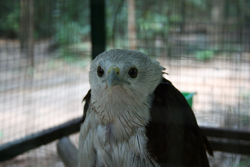 Trakan Zoo Bird of Prey