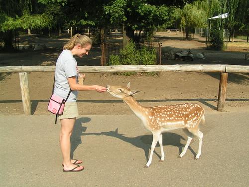 Deer Park 1
