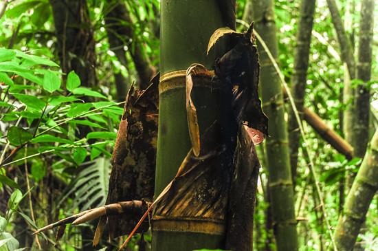 Jardin Botanico Quindio, Colombia