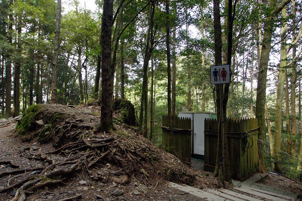 觀霧巨木步道-036