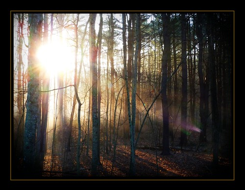 trees light sun mist sunrise connecticut gimp ct rays ballouville