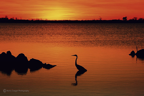 sunset bird nature water rock landscape virginia smooth calm serene virginiabeach jaegemt1 mariajaegerphotography