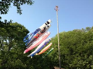 桜ヶ丘公園の鯉のぼり