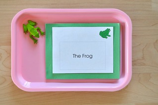 Frog Nomenclature Booklet