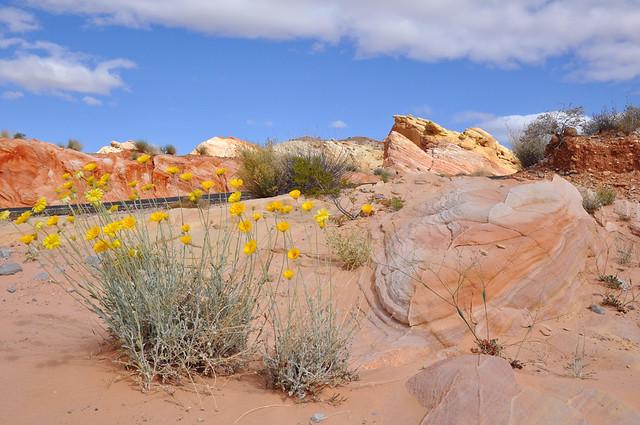 Как взорвать себе мозги за 8 дней - Юта, Невада, Калифорния, Аризона. Апрель 2013.